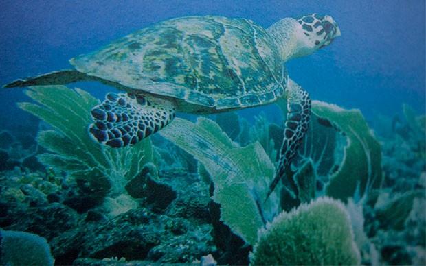 Karibiksegeln 2015 Unterwasserwelt